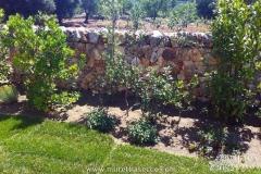 essenze-mediterranee-progettazione-giardini